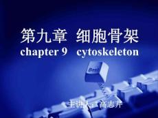 第九章  细胞骨架