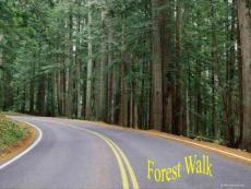 森林健康步道