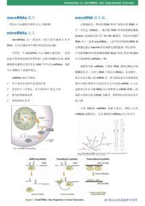 microRNAs 简介microRNAs 定义microRNA 的生成: