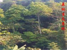 森林生态系统