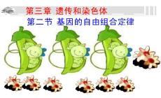 第二节基因的自由组合定律课件_理化生_高中教育_教育专区