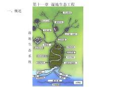 生态工程学(王赞红)第十一章 湿地e