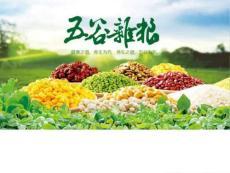 农业科技农产品农作物五谷杂粮PPT模板.ppt