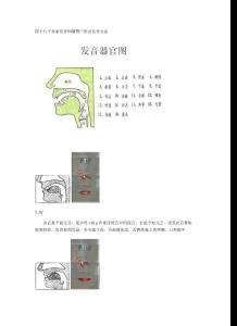 英语国际音标发音舌位图详解及发音方法大全