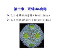 病毒学课件第10篇 章 双链rna病毒
