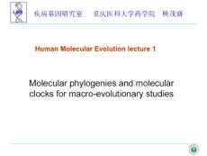 人类分子进化