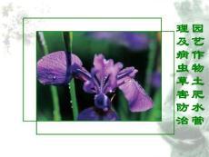 【精品】园艺作物土肥水管理及病虫草害防治93