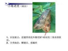 园艺植物保护病虫观察