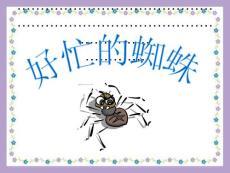 《好忙的蜘蛛》PPT