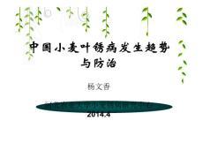 中国小麦锈病发生与防治-杨文香