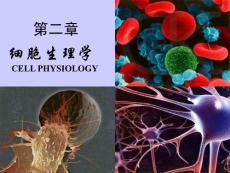 蛋白质跨膜转运