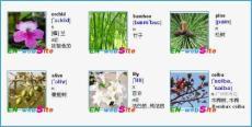英文单词图文-常见植物英文名称