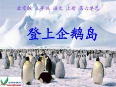 北京版三年级语文上册《登上企鹅岛》课件