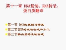 DNA复制、RNA转录、蛋白质翻译