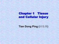 \病理学课件Ch01Section1Adaptation