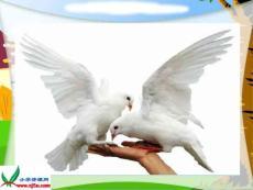 小学语文《儿童和平条约》课件资料合集