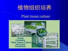 【精品PPT】植物组织培养