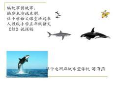 《鲸》说课课件.ppt