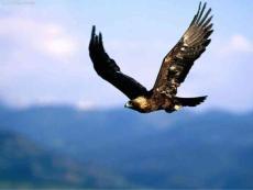 第七课神奇的翅膀资料