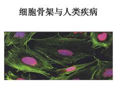 细胞骨架与人类疾病