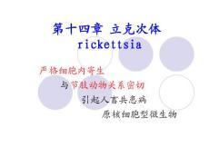 陈庆新《病毒学》第十四章 立克次体