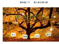14树的日子
