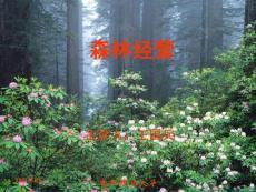 林学概论第11讲-森林经营