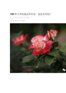 100种月季玫瑰品种科普,迷乱你的眼