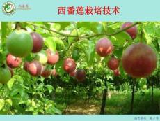 西番莲栽培技术 (1&#4..