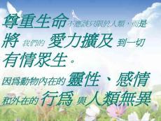 动物温馨爱力篇说课讲解