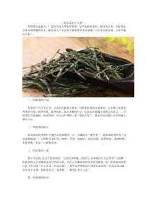 阳羡茶是什么茶?