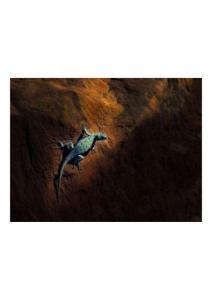 2011年2月2日 Lizard, Zion National Park