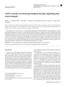 LAZY1 controls rice sh..