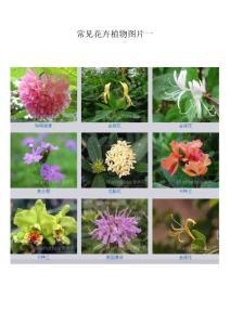 植物名称与图片