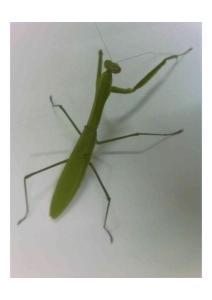 螳螂的舞姿