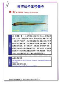 隐ˊ鱼黄巨身隐鱼