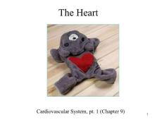 The cardiovascular syste..