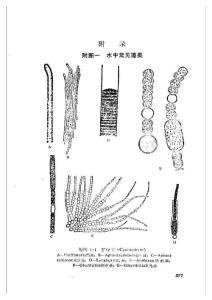 微生物图谱